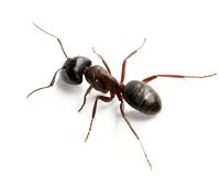 Maden en Mieren